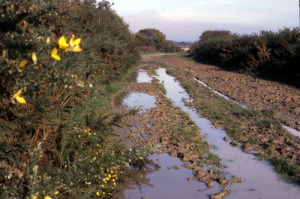 Muddy trail in 1984